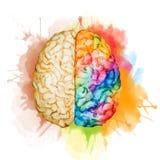 Cervello dell'acquerello Immagini Stock Libere da Diritti