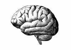 Cervello dell'incisione con il nero sulla BG bianca Fotografia Stock