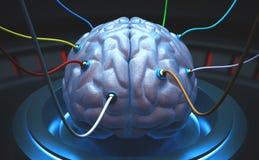 Cervello di scienza immagine stock