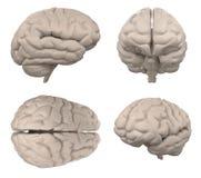 Cervello isolato sulla rappresentazione bianca 3d Fotografie Stock Libere da Diritti