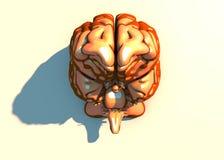 Cervello, neuroni, sinapsi, circuito dei neuroni, malattie degeneranti, Parkinson della rete neurale Immagine Stock Libera da Diritti