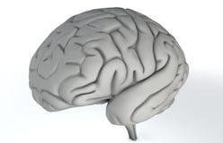 Cervello su bianco Fotografia Stock
