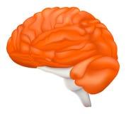 Cervello umano Immagini Stock Libere da Diritti