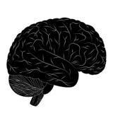 Cervello umano. Immagine Stock