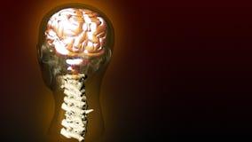 Cervello umano 1 illustrazione vettoriale
