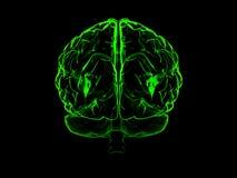 cervello umano 3d Fotografie Stock Libere da Diritti