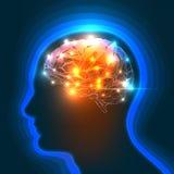Cervello umano Immagine Stock Libera da Diritti