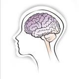 Cervello umano all'interno di una siluetta capa semplice Immagine Stock