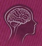 Cervello umano all'interno di una siluetta semplice del fronte Fotografie Stock