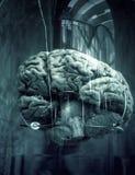 Cervello umano in barca immagine stock