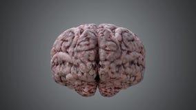 Cervello umano che gira intorno animazione di ciclaggio resa 3D illustrazione di stock