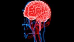 Cervello umano con i nervi, le vene e l'anatomia delle arterie illustrazione di stock