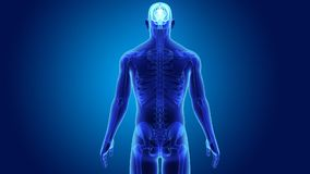 Cervello umano con lo scheletro illustrazione di stock