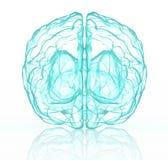 Cervello umano dei raggi x in blu Fotografia Stock Libera da Diritti