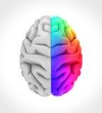 Cervello umano destro e sinistro Fotografia Stock Libera da Diritti