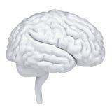 cervello umano di bianco 3d. Una vista laterale Immagini Stock Libere da Diritti