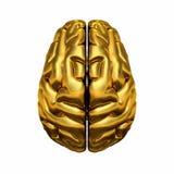Cervello umano dorato Immagini Stock Libere da Diritti