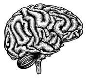 Cervello umano nel retro stile d'annata royalty illustrazione gratis