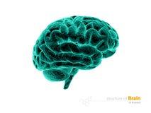 Cervello umano, raggi x, struttura di anatomia Illustrazione di anatomia 3d del cervello umano isolato con illustrazione di stock