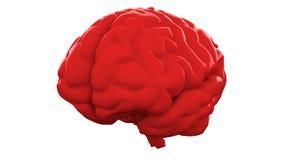 Cervello umano rosso su fondo bianco Modello anatomico, illustrazione 3d royalty illustrazione gratis