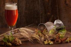 Cerveza con los saltos y la cebada Foto de archivo libre de regalías