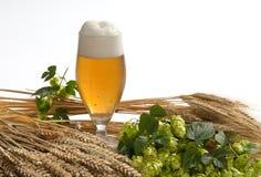 Cerveza de barril con los saltos Foto de archivo