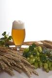 Cerveza de barril con los saltos Imagen de archivo libre de regalías