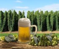 Cerveza de barril con los saltos Fotos de archivo libres de regalías