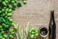 Cerveza de la botella y del vidrio con elaborar los ingredientes Flor del salto con trigo Visión superior Fotos de archivo libres de regalías