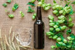 Cerveza de la botella y del vidrio con elaborar los ingredientes Flor del salto con trigo Visión superior Foto de archivo libre de regalías