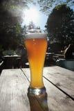 Cerveza del trigo Imagen de archivo libre de regalías