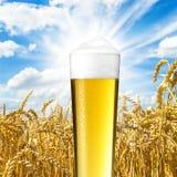 Cerveza del verano con descensos del rocío Fotografía de archivo libre de regalías