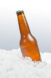 Cerveza en el hielo Fotografía de archivo libre de regalías