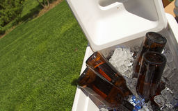 Cerveza en el hielo Foto de archivo libre de regalías