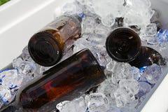 Cerveza en el hielo Imágenes de archivo libres de regalías