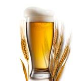 Cerveza en el vidrio y el trigo aislados en blanco imagen de archivo