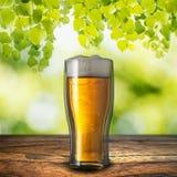 Cerveza en la tabla de madera Imágenes de archivo libres de regalías
