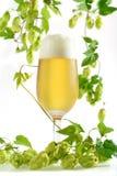 Cerveza en vidrio con los brotes del salto Imagenes de archivo