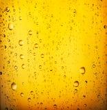 Cerveza fría Fotos de archivo libres de regalías