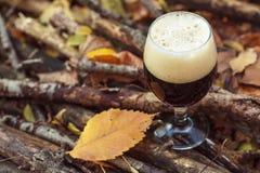 Cerveza oscura en bosque del otoño fotografía de archivo