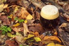 Cerveza oscura en bosque del otoño imagenes de archivo