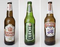 Cervezas polacas fijadas imagen de archivo libre de regalías