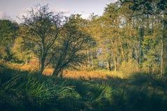 Cervi che camminano in una certa erba alta nel sole di autunno immagini stock libere da diritti