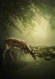 Cervi del terreno boscoso Fotografia Stock Libera da Diritti
