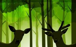 Cervi della foresta Immagine Stock