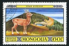 Cervi della Mongolia immagini stock