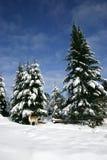 Cervi di aratura nella neve Immagine Stock