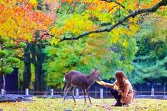 Cervi di Nara alla stagione di caduta, Nara Japan immagine stock libera da diritti