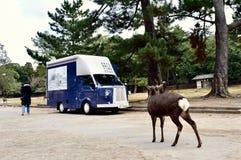 Cervi ed automobile del parco del Giappone Nara fotografie stock libere da diritti