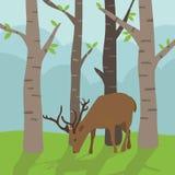 Cervi in foresta Fotografie Stock Libere da Diritti